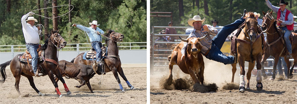 cattle,roping,cleelum
