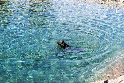 rivers,lakes,trails,dog,cleelum