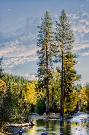 outdoors,trees,cleelum