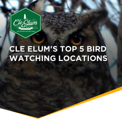 Cle Elum's Top 5 Bird Watching Locations